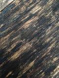 μεγάλο δάσος δέντρων σύστασης Στοκ εικόνα με δικαίωμα ελεύθερης χρήσης