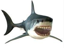Μεγάλο άσπρο στόμα καρχαριών Στοκ φωτογραφίες με δικαίωμα ελεύθερης χρήσης