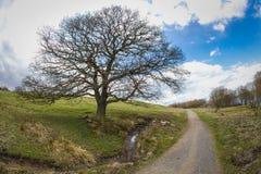 Μεγάλο δέντρο εκτός από την πορεία Στοκ φωτογραφίες με δικαίωμα ελεύθερης χρήσης