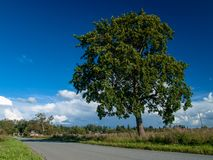 Μεγάλο δέντρο πολυτέλειας κοντά στο δρόμο Στοκ Εικόνες