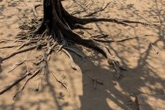 μεγάλο δέντρο ρίζας Στοκ εικόνα με δικαίωμα ελεύθερης χρήσης