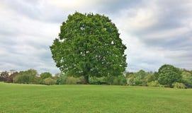 Μεγάλο δέντρο στην αγροτική ρύθμιση Στοκ φωτογραφίες με δικαίωμα ελεύθερης χρήσης