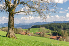 Μεγάλο δέντρο στον πράσινους λόφο, το μπλε ουρανό, τα σύννεφα και τα βουνά Στοκ Εικόνα