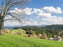 Μεγάλο δέντρο στον πράσινους λόφο, το μπλε ουρανό, τα σύννεφα και τα βουνά Στοκ φωτογραφία με δικαίωμα ελεύθερης χρήσης
