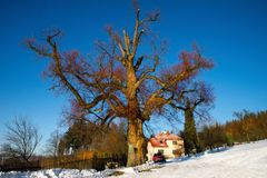 Μεγάλο δέντρο στο χιονώδες τοπίο με το εξοχικό σπίτι, τον κήπο και το δάσος Στοκ Εικόνες