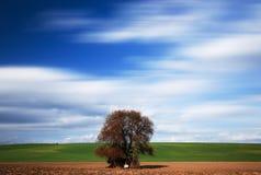 Μεγάλο δέντρο χρωμάτων πτώσης Στοκ εικόνες με δικαίωμα ελεύθερης χρήσης