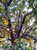 Μεγάλο δέντρο Στοκ φωτογραφίες με δικαίωμα ελεύθερης χρήσης