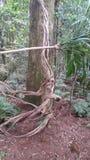 Μεγάλο δέντρο forst Στοκ φωτογραφία με δικαίωμα ελεύθερης χρήσης