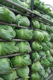 Μεγάλο αγρόκτημα λάχανων στο βουνό και SK Στοκ εικόνες με δικαίωμα ελεύθερης χρήσης