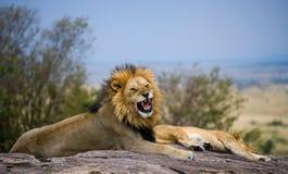 Μεγάλο αρσενικό λιοντάρι με τον πανέμορφο Μάιν σε έναν μεγάλο βράχο Εθνικό πάρκο Κένυα Τανζανία mara masai serengeti Στοκ Εικόνες