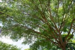 μεγάλο δασικό δέντρο Στοκ εικόνες με δικαίωμα ελεύθερης χρήσης