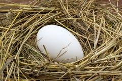 Μεγάλο αυγό χήνων σε μια φωλιά του σανού Στοκ εικόνες με δικαίωμα ελεύθερης χρήσης