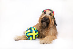Μεγάλο γαλλικό σκυλί ποιμένων με μια σφαίρα Στοκ Φωτογραφίες