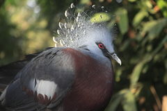 Μεγάλο εξωτικό πουλί Στοκ Φωτογραφίες