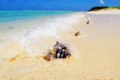 Μεγάλο θαλασσινό κοχύλι στην άμμο στην παραλία Στοκ εικόνες με δικαίωμα ελεύθερης χρήσης