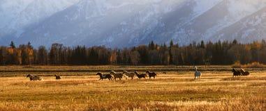 Μεγάλο λιβάδι Teton Στοκ εικόνες με δικαίωμα ελεύθερης χρήσης