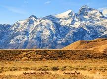 Μεγάλο λιβάδι Teton Στοκ φωτογραφία με δικαίωμα ελεύθερης χρήσης