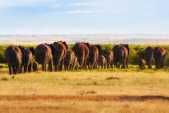 Μεγάλο κοπάδι ελεφάντων Στοκ Φωτογραφίες