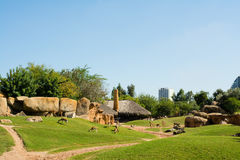 Μεγάλο κλουβί με τα ζώα στην πράσινη χλόη στο ζωολογικό κήπο της Βαλένθια Στοκ Εικόνες