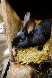 Μεγάλο μαύρο κουνέλι σε ένα κλουβί Στοκ φωτογραφία με δικαίωμα ελεύθερης χρήσης