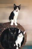 μεγάλο οικογενειακό γατάκι γατών μικρό στοκ εικόνα