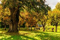 Μεγάλο παλαιό δέντρο σε ένα πάρκο με τους τουρίστες που περπατούν εκτός από στο μουσείο-κτήμα Mikhailovskoye Στοκ Εικόνα