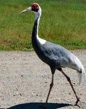 Μεγάλο πουλιών Στοκ εικόνα με δικαίωμα ελεύθερης χρήσης