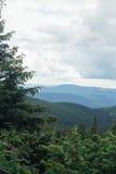 Μεγάλο πράσινο κομψό δέντρο με το τοπίο βουνών στο υπόβαθρο στοκ εικόνα με δικαίωμα ελεύθερης χρήσης