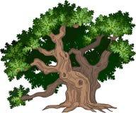 μεγάλο δρύινο δέντρο στοκ εικόνα