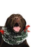 Μεγάλο σκυλί στο κοστούμι Χριστουγέννων στοκ εικόνα με δικαίωμα ελεύθερης χρήσης