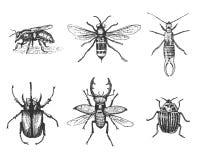 Μεγάλο σύνολο κανθάρων και μελισσών ζωύφιων εντόμων πολλά είδη στην εκλεκτής ποιότητας ξυλογραφία απεικόνισης παλαιών χεριών συρμ Στοκ Εικόνες