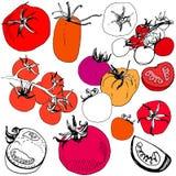 Μεγάλο σύνολο σκιαγραφημένης ντομάτας ελεύθερη απεικόνιση δικαιώματος