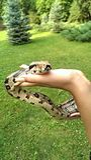 μεγάλο φίδι στοκ φωτογραφίες με δικαίωμα ελεύθερης χρήσης