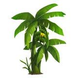 μεγάλο φωτεινό στενό πράσινο δέντρο φύλλων μπανανών επάνω Στοκ Εικόνες
