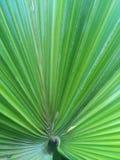 Μεγάλο φύλλο του άγριου φυτού Στοκ εικόνα με δικαίωμα ελεύθερης χρήσης