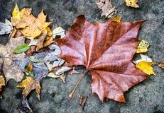 Μεγάλο φύλλο φθινοπώρου Στοκ Φωτογραφία
