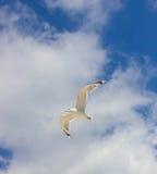 Μεγάλο seagull που πετά στο μπλε ουρανό Στοκ Φωτογραφίες