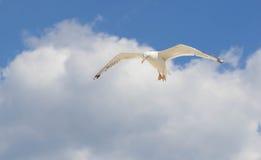Μεγάλο seagull που πετά στο μπλε ουρανό Στοκ εικόνες με δικαίωμα ελεύθερης χρήσης