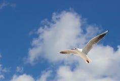 Μεγάλο seagull που πετά στο μπλε ουρανό Στοκ Εικόνα