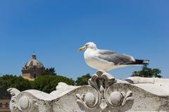 Μεγάλο seagull στο μπλε υπόβαθρο Στοκ εικόνες με δικαίωμα ελεύθερης χρήσης