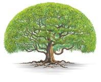 Μεγάλο tree03 Στοκ Εικόνα