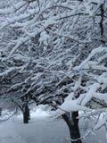 Μεγαλοπρέπεια του χειμώνα στοκ φωτογραφίες
