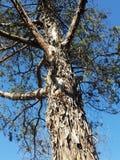 Μεγαλοπρεπές δέντρο στοκ εικόνα με δικαίωμα ελεύθερης χρήσης