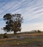 Μεγαλοπρεπές δέντρο στοκ εικόνες με δικαίωμα ελεύθερης χρήσης