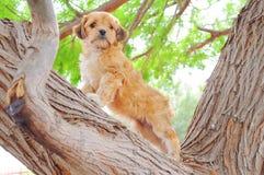Μεγαλοπρεπές σκυλί που στέκεται στο δέντρο όπως ένα λιοντάρι στοκ εικόνα