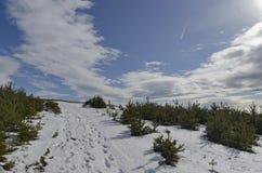 Μεγαλοπρεπής άποψη του νεφελώδους ουρανού, χειμερινό βουνό, χιονώδες ξέφωτο, δάσος κωνοφόρων στο βουνό Plana Στοκ Εικόνες