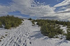 Μεγαλοπρεπής άποψη του νεφελώδους ουρανού, χειμερινό βουνό, χιονώδες ξέφωτο, δάσος κωνοφόρων στο βουνό Plana Στοκ Φωτογραφίες