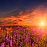 Μεγαλοπρεπής δραματική σκηνή φανταστικό ηλιοβασίλεμα πέρα από το λιβάδι με το lupine λουλουδιών και τα ζωηρόχρωμα σύννεφα στον ου Στοκ Φωτογραφία