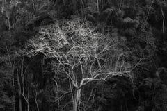 Μεγαλοπρεπές γιγαντιαίο δέντρο ζουγκλών, καταπληκτικό δασικό υπόβαθρο Στοκ εικόνες με δικαίωμα ελεύθερης χρήσης