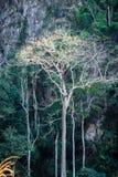 Μεγαλοπρεπές γιγαντιαίο δέντρο ζουγκλών, καταπληκτικό δασικό υπόβαθρο Στοκ Εικόνες